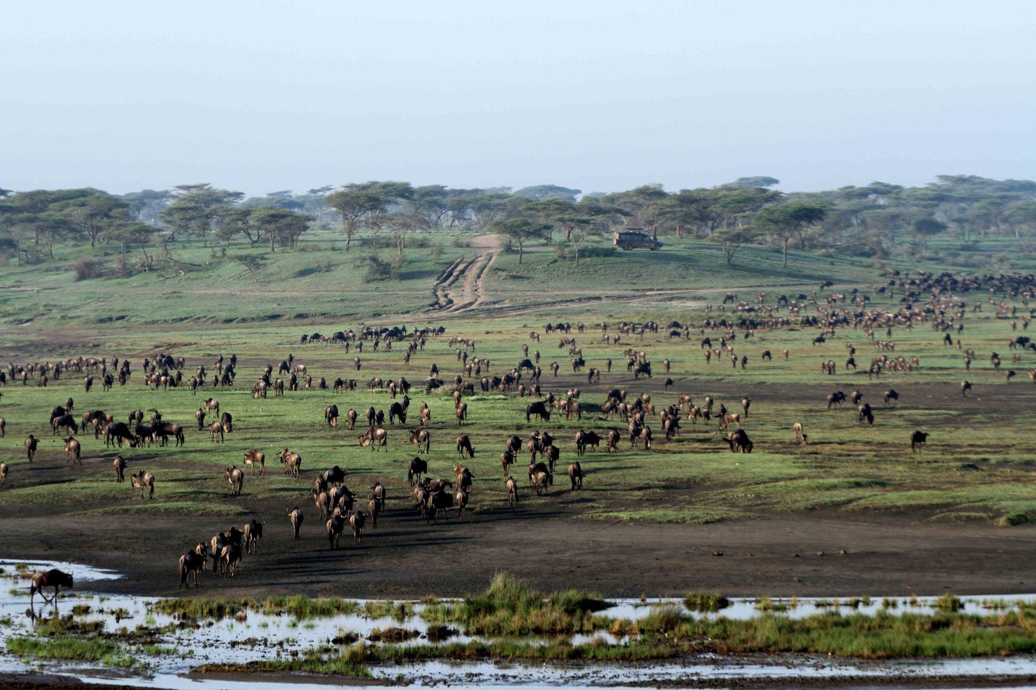 Tanzania Safari Serengeti Great Migration